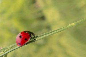 Важность борьбы с вредителями в вашем доме