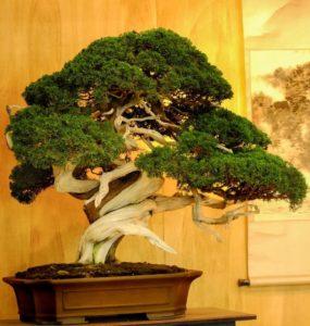 Как ухаживать за комнатными деревьями бонсай для новичков