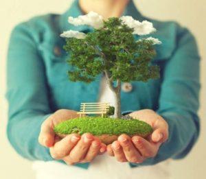 Все круги приватизации садового участка